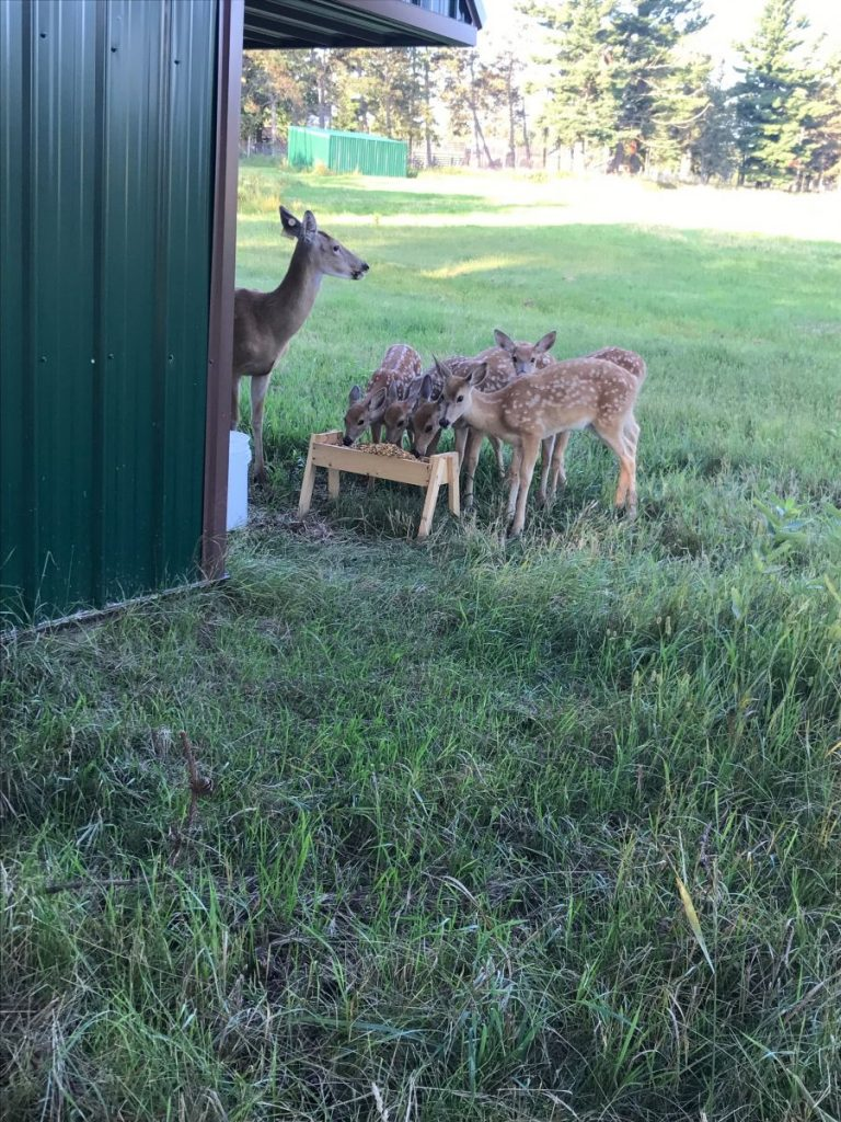 Come see the deer and elk